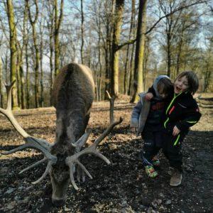 Wild- und Freizeitpark Daun
